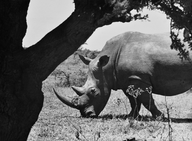 201711_rinoceronte.jpg